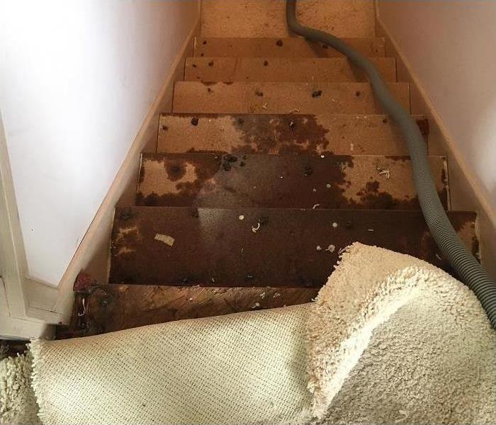 Water Damage in a Carson City Home