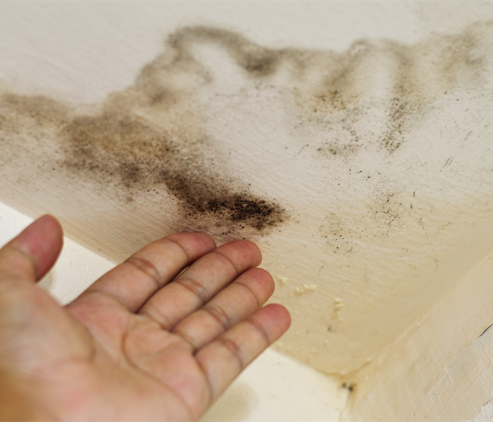 Mold Remediation Why and What Can be Done About Mold Damage