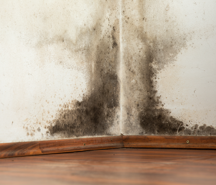 Mold Remediation Laundry Room Tips on Preventing Mold Damage in Area Homes