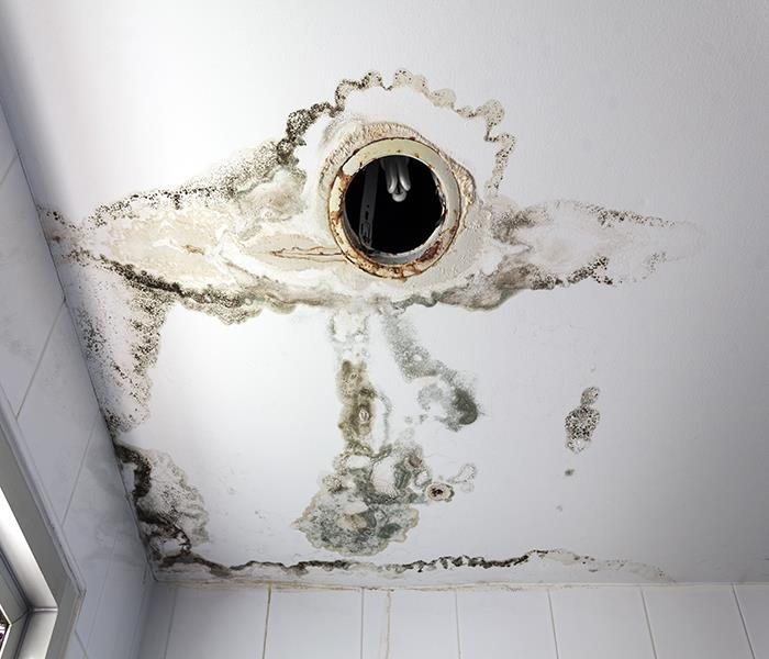 Mold Remediation Does Your Zephyr Cove Property Have Mold?