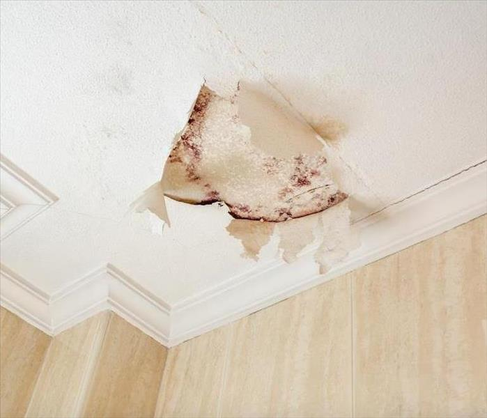 Mold Remediation Warning: What can You do About Mold Damage in a South Lake Tahoe Home Right Now