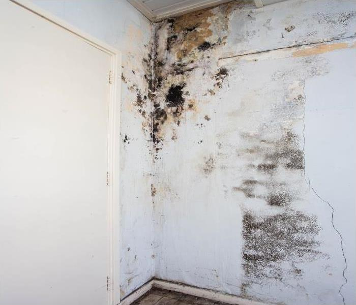 Mold Remediation Call Our Experts At SERVPRO When You Have A Mold Issue In Your Carson City Home