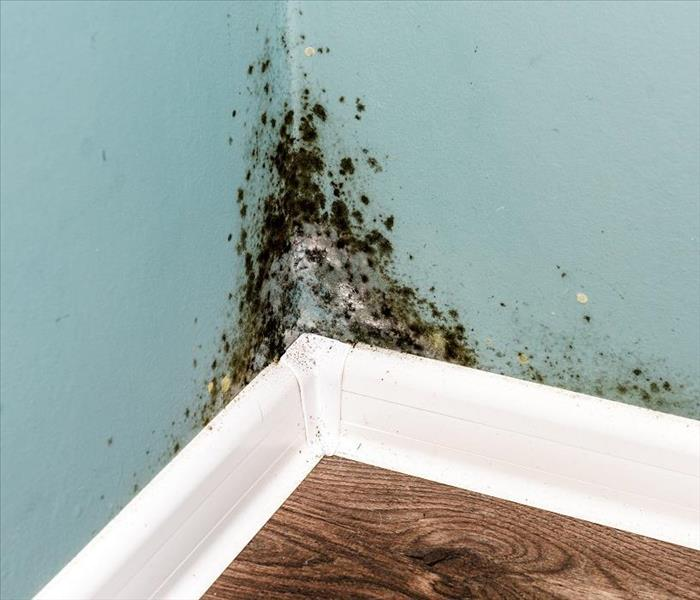 Mold Remediation Remediating Mold Damage in Tahoe