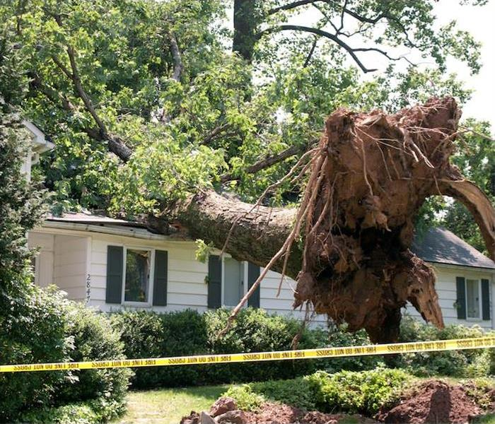 Tree fallen on roof of home