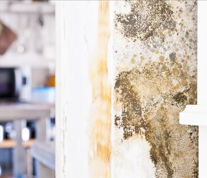 Mold Remediation Carson City's Mold Damage Experts Talk About Prevention Methods