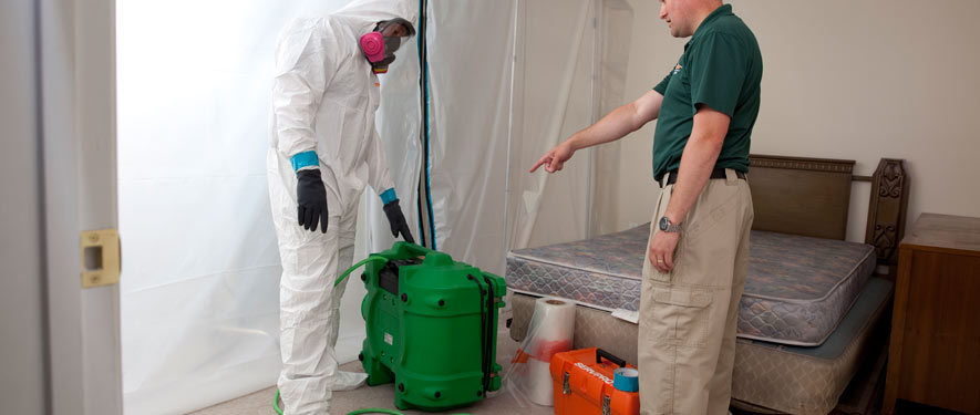 Carson City, NV mold removal process